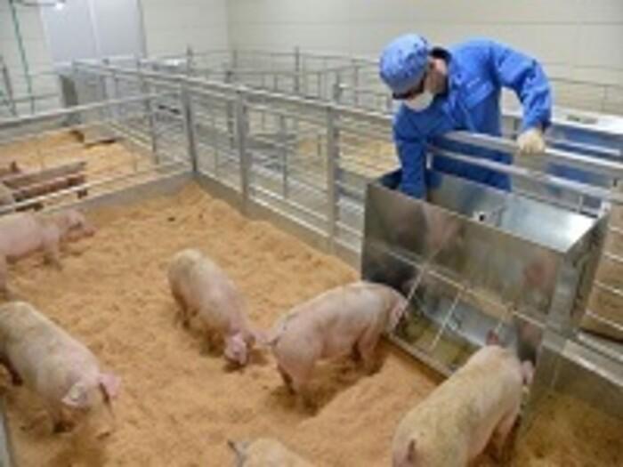 【動物試験】動物飼育や採血、解剖等を伴う試験の受託(医薬品・細菌試験可)の画像1