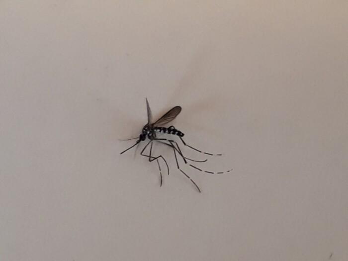 【忌避・殺虫試験】蚊・ダニ・ゴキブリなど害虫を用いた試験(薬剤・装置の効果確認・評価試験)の画像1