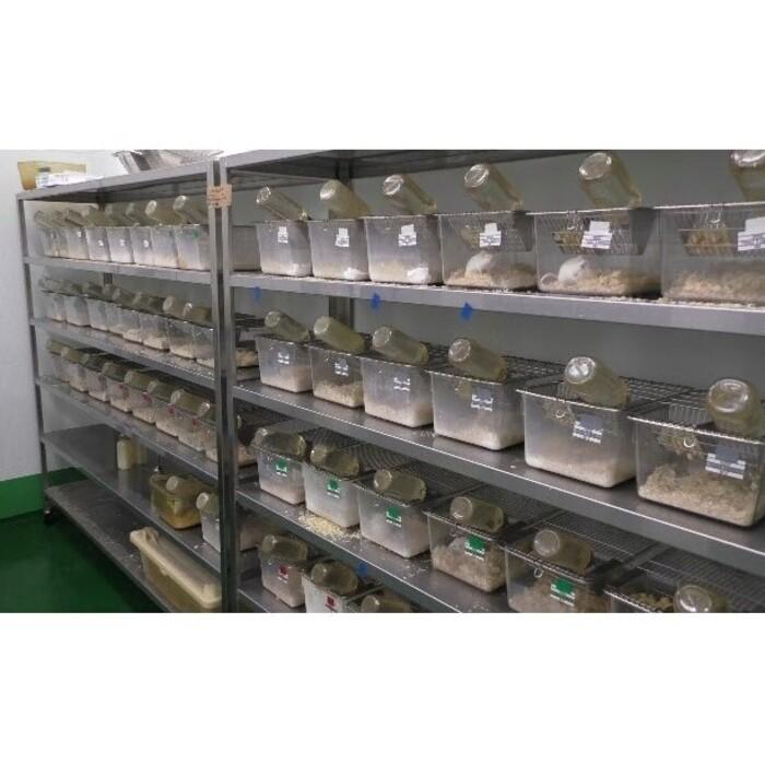 【関東】飼育もできる動物実験ラボの画像3